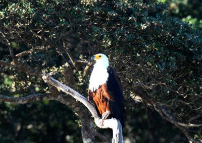 Bird-Watching